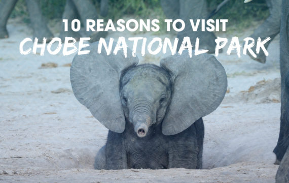 10 Reasons to Visit Chobe National Park_blog image
